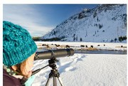 Snowmobile Yellowstone national park